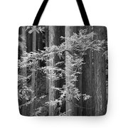 Redwoods Ir 0625 Tote Bag