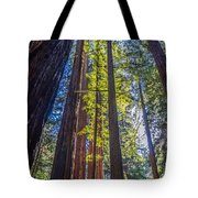 Redwoods Of Muir Woods Tote Bag
