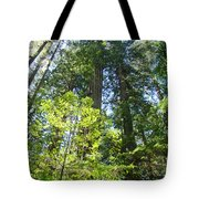 Redwoods Trees Forest Art Prints Baslee Troutman Tote Bag