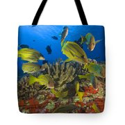 Reef Scene Tote Bag by Dave Fleetham - Printscapes