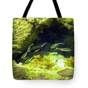 Reef Tide Pool Tote Bag