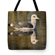 Young Gull Reflections Tote Bag