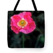 Regal Looking Poppy. Tote Bag