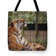 Regal Tiger Tote Bag