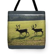 Reindeers On Swedish Fjeld Tote Bag