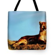 Relaxing In The Sun Tote Bag