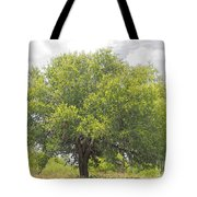 Remember The Trees Tote Bag