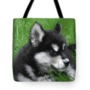 Resting Alusky Puppy Laying In Green Grass Tote Bag