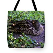 Resting But Alert Tote Bag