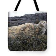 Resting Gray Seal On Seaweed Tote Bag