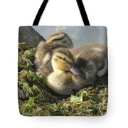Resting On The Lake Shore. Tote Bag