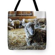 Resting Sheep Tote Bag