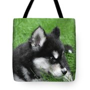 Resting Two Month Old Alusky Puppy Dog In Grass Tote Bag