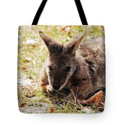 Resting Wallaby Tote Bag