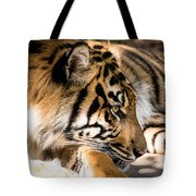 Resting Yet Watchful Tiger Tote Bag
