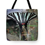 Resting Zebra Swallowtail Butterfly Square Tote Bag