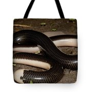 Reticulate Worm Snake Tote Bag