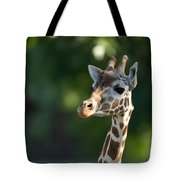 Reticulated Giraffe At The Omaha Zoo Tote Bag