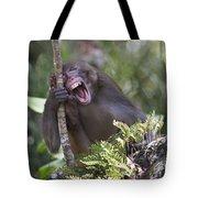 Rhesus Laughing Tote Bag
