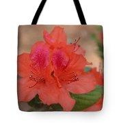 Rhododendrum Oldhamii Tote Bag