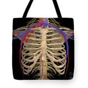 Rib Cage With Nerves, Arteries Tote Bag