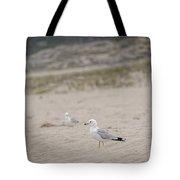 Ring - Billed Gull Tote Bag