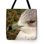 Ring Billed Gull Profile Tote Bag