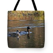 Ring Necked Duck Tote Bag