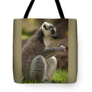 Ring-tailed Lemur Holding A Clump Of Grass Tote Bag