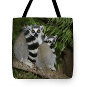 Ring-tailed Lemurs Tote Bag