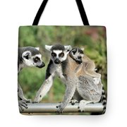 Ring Tailed Lemurs With Baby Tote Bag