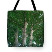 River Birches Tote Bag
