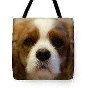 River Dog Closeup Tote Bag
