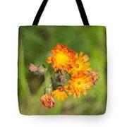 Roadside Wildflower Tote Bag