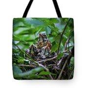 Robin Chicks In Nest. Tote Bag