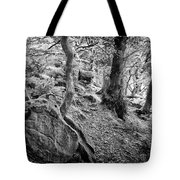 Rock And Trees Tote Bag