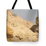 Rock Hyrax Procavia Capensis Tote Bag