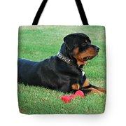 Rottweiler Portrait Tote Bag