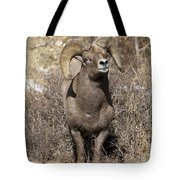 Rocky Mountain Big Horn Sheep Tote Bag