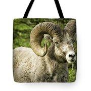 Rocky Mountain Bighorn Sheep Tote Bag