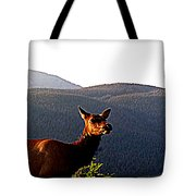 Rocky Mountain Elk Vi Tote Bag