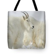 Rocky Mountain Goats In Wyoming Winter Tote Bag