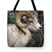 Rocky Mountain Ram Tote Bag