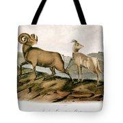 Rocky Mountain Sheep, 1846 Tote Bag
