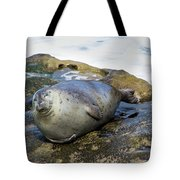 Roly Poly Seal Tote Bag