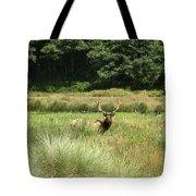 Roosevelt Elk 2 Tote Bag