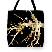 Root Nodules On Soya Plant Tote Bag