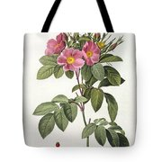 Rosa Carolina Corymbosa Tote Bag by Pierre Joseph Redoute