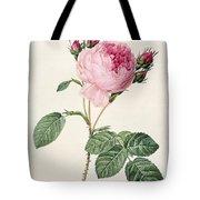 Rosa Centifolia Tote Bag