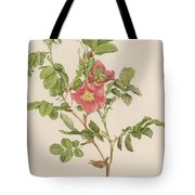 Rosa Cinnamomea The Cinnamon Rose Tote Bag